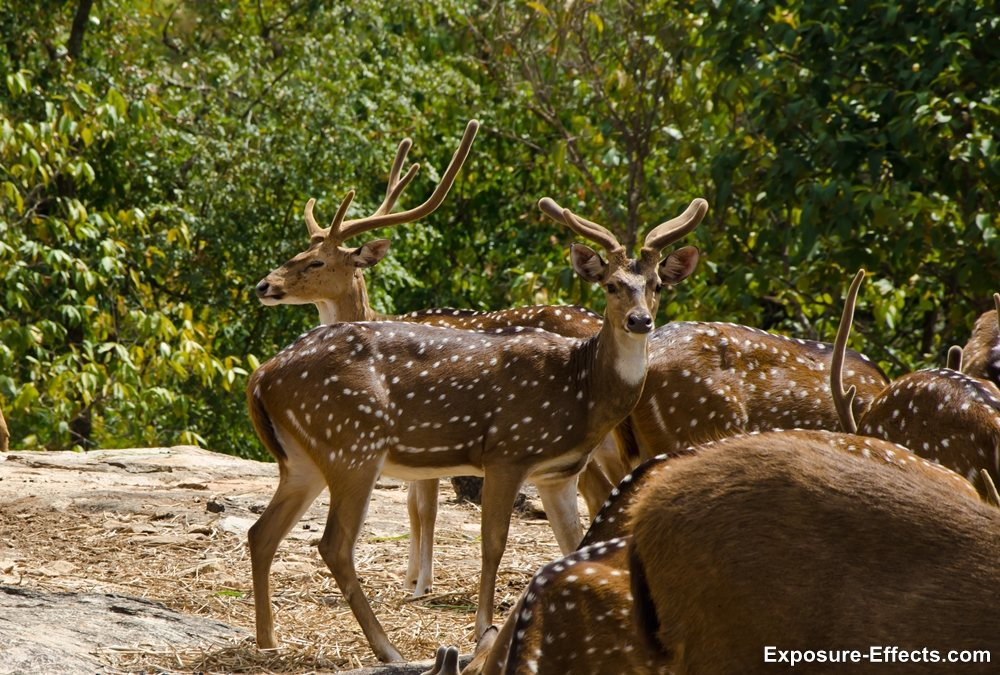 Bannerghatta bangalore jungle lodges and resorts-14