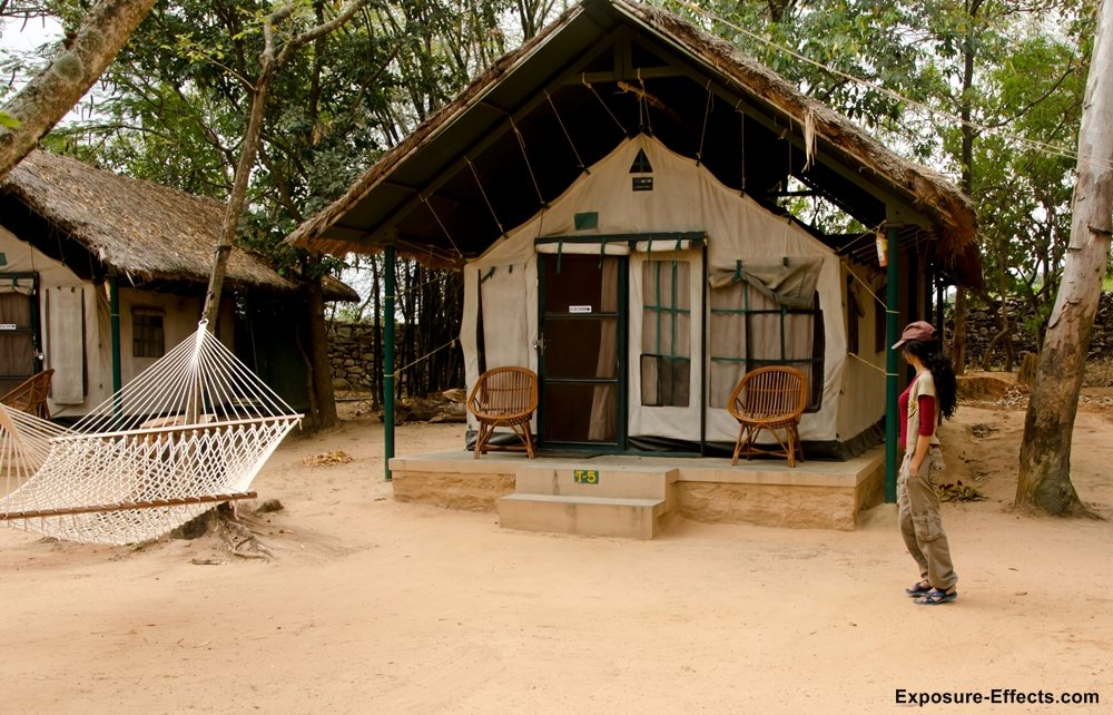 Bannerghatta bangalore jungle lodges and resorts-41-swiss-tent