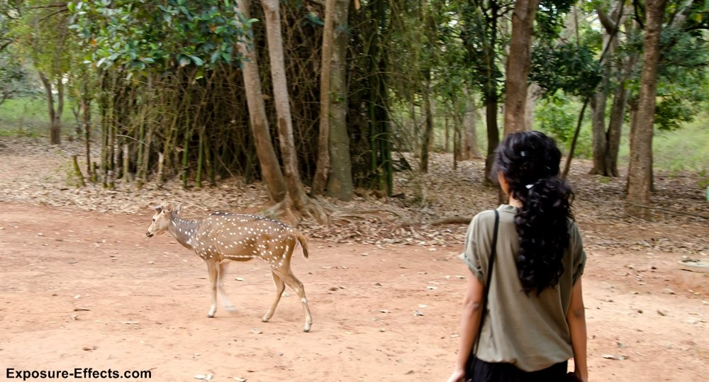 Bannerghatta bangalore jungle lodges and resorts-62