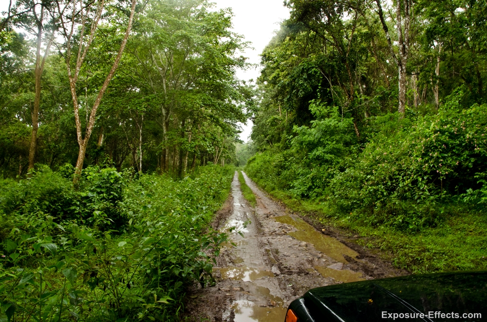 Dubare Forest Jeep Safari Jungle Lodges and Resorts