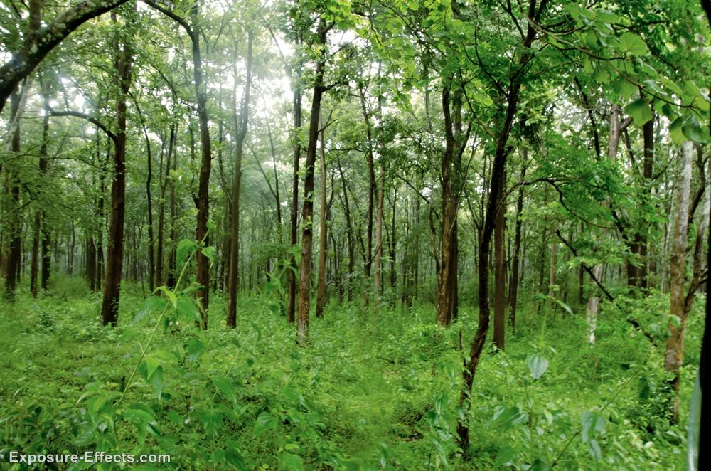 Dubare Forest