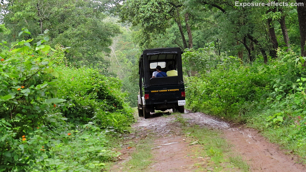 Jeep safari at dubare elephant camp jungle lodges