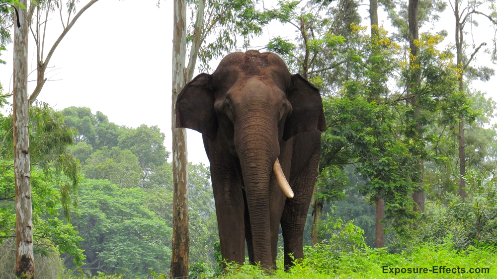 Jungle lodges and resorts Elephants dubare elephant camp