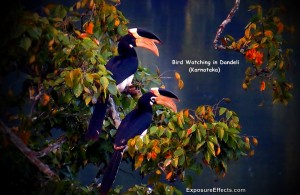 Bird Watching in Dandeli Ganeshgudi Karnataka