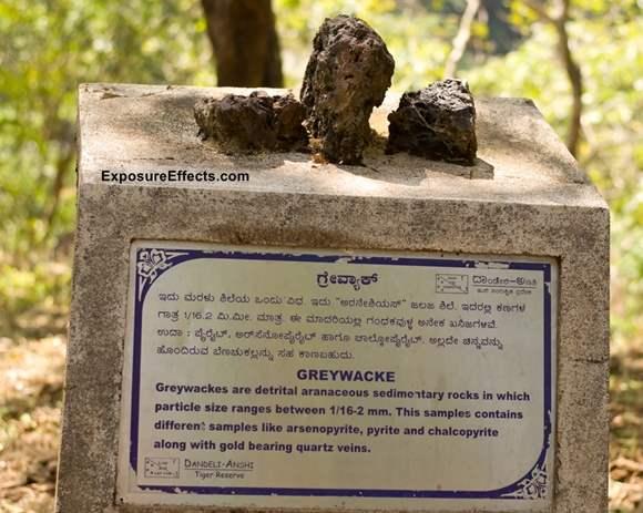 Greywacke - Rock