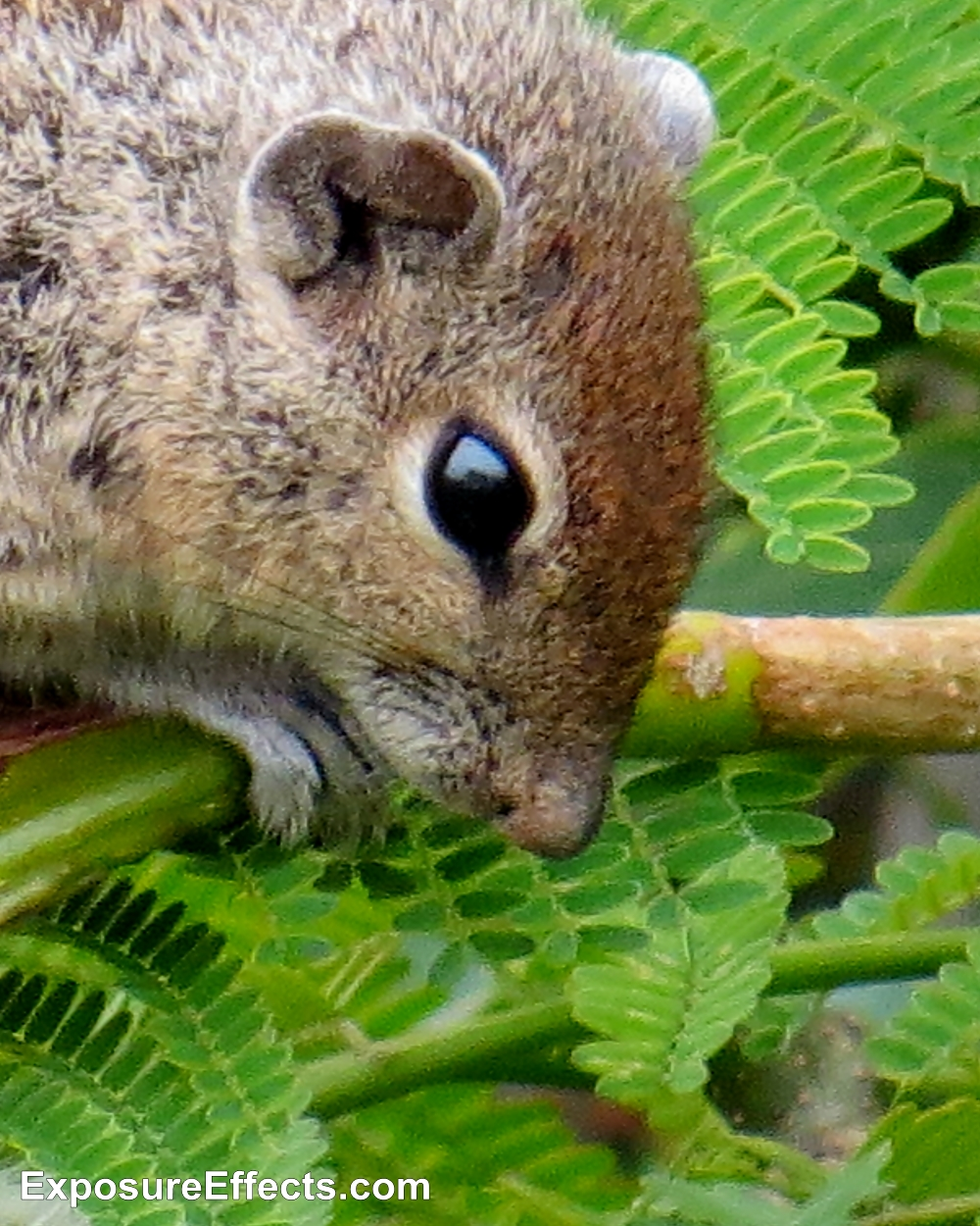 Squirrel Behaviour