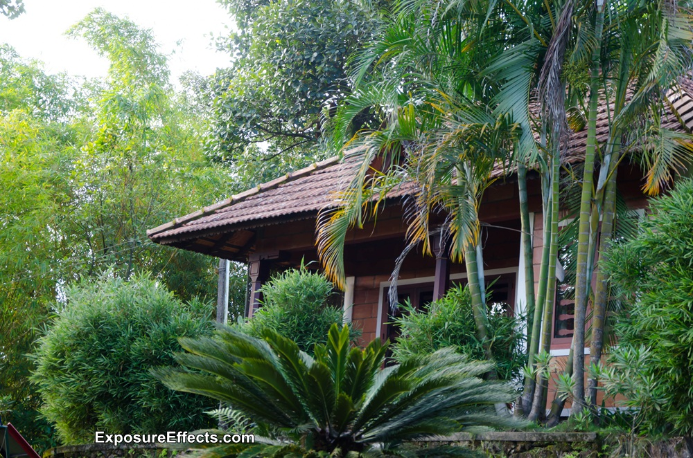 Misty Woods Coorg Resort Pics