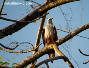 Sharavathi Adventure Camp - Birds spotted during Kayaking