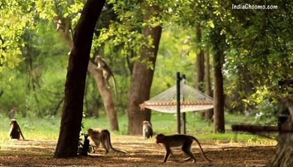 Galibore Nature Camp Jungle Lodges and Resorts