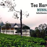 Munnar - Tea Harvester REVIEW