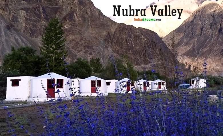 Nubra Valley Camping