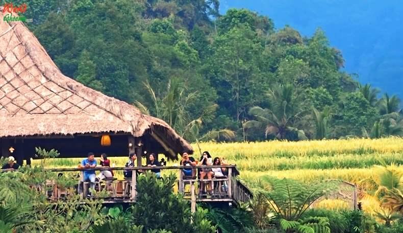 Bali Jatiluwih Rice Terraces Hotels