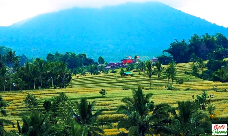 Bali Jatiluwih Rice Terraces