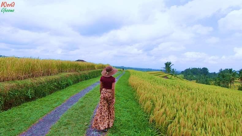 Bali Rice Terraces Jatiluwih