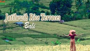 Jatiluwih Rice Terraces in BALI | Bali Attractions | Things to Do