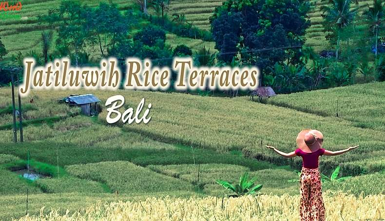 Jatiluwih Rice Terraces In Bali Bali Attractions Things To Do