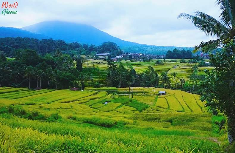 Jatiluwih Rice Terraces bali rice fields