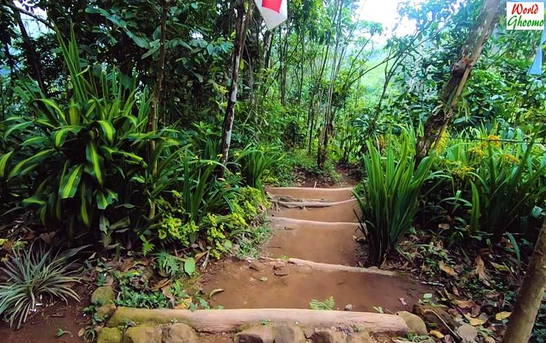 Pathway Towards Banyumala Waterfall
