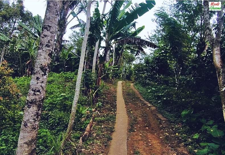 Road towards Banyumala Waterfall