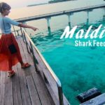 Maldives – Shark Feeding at Sun Island Resort & Spa
