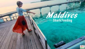 Maldives - Shark Feeding at Sun Island Resort Spa