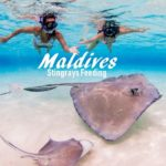 Maldives – Stingrays Feeding at Sun Island Resort
