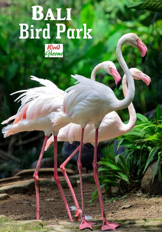 Bali Bird Park Attractions Bali