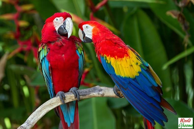 Bali Bird Park attractions