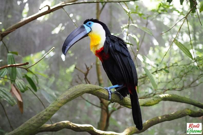 Bali Bird Park birds