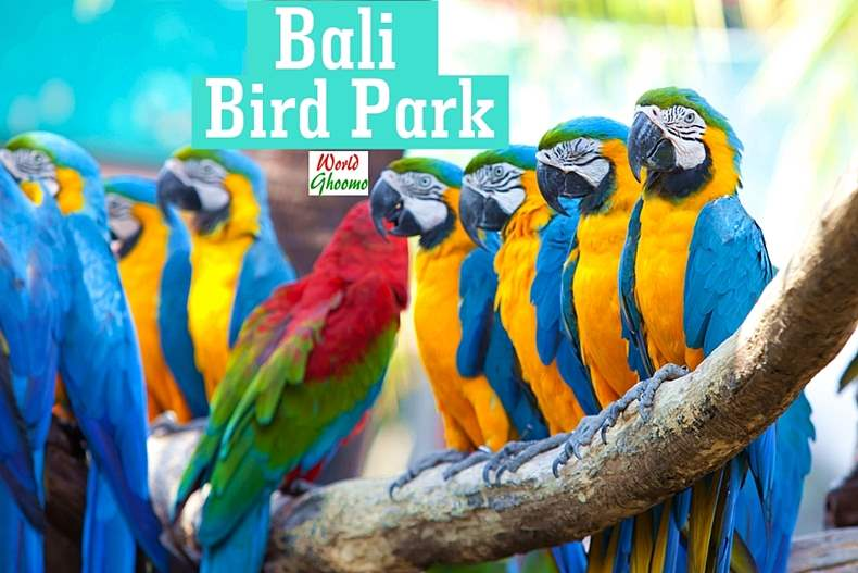 Bali Bird Park Guide Everything You Need To Know World Ghoomo