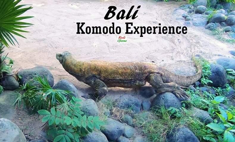 Bali Komodo Experience