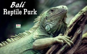 Bali Reptile Park Guide | What Not To Miss