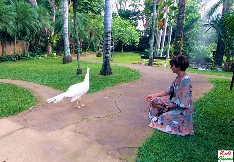 Interaction with Birds at Bali Bird Park