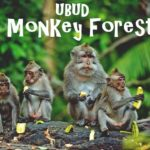 Ubud Monkey Forest Attractions | Bali Wildlife Experience