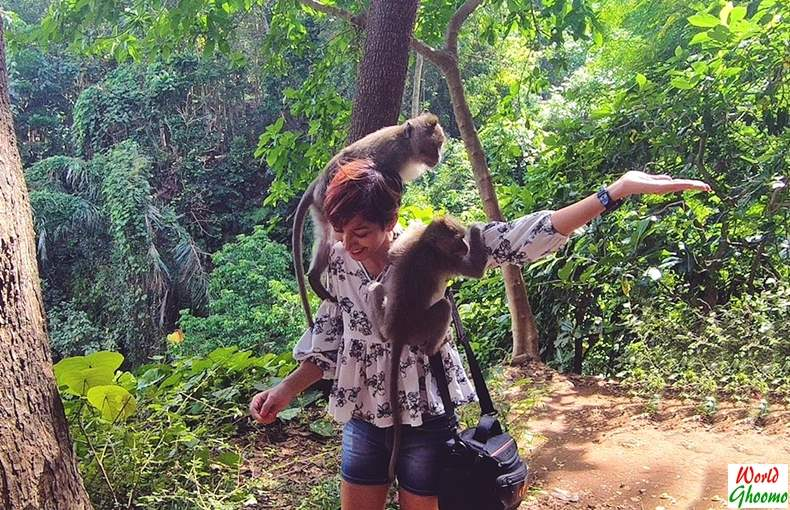 Ubud Monkey Forest Bali Adventure