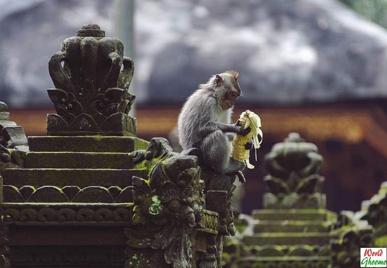 Ubud Monkey Forest Bali Wildlife Experience
