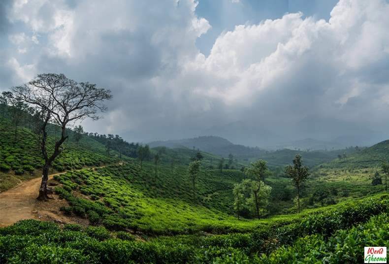 Wayanad Plantation Achoor Tea Estate