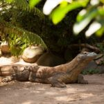 Indonesia to Close Komodo Island for tourists from January 2020