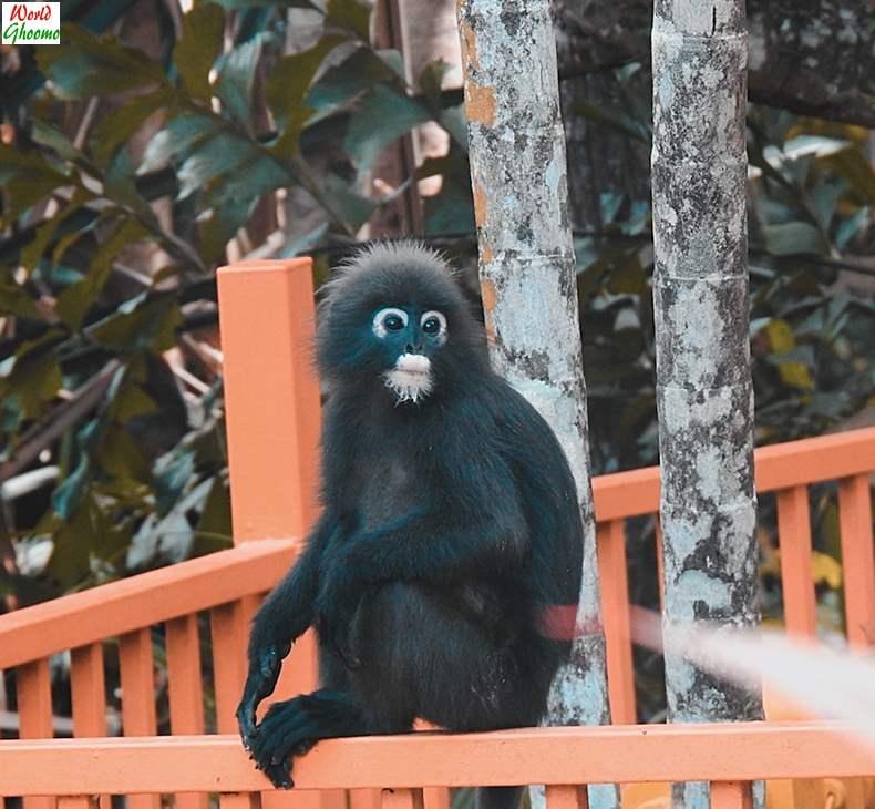 Langkawi Wildlife