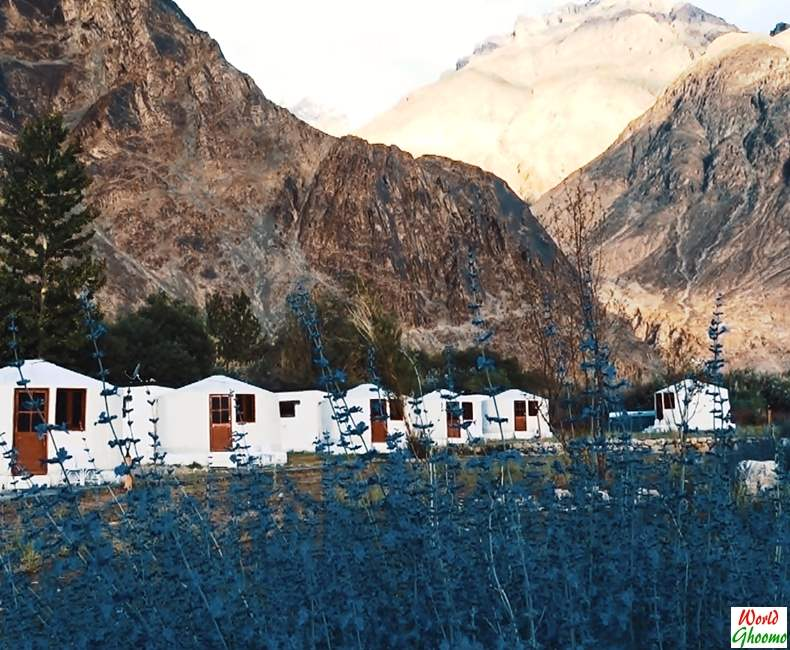 Nubra Valley Accommodation